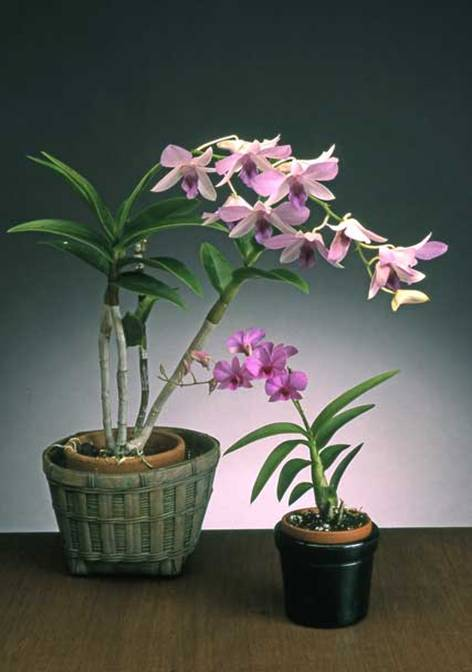 Ag West Supply >> Orchids @ The South Florida Garden Show